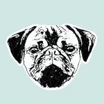 Dieta Barf y Educación Canina