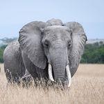 animals wildlife