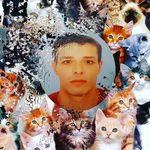 cat_s01