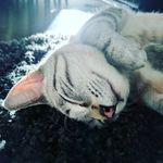 Cat Grounds