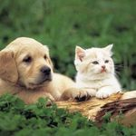 Cats and Dogs United