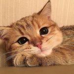 Sweet Cats Of Instagram