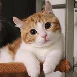 CATS    CUTE     SWEET