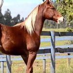 Cavalo_4demilha