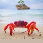 Christmas Island Tourism