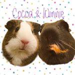 Cocoa & Winnie