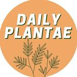 Isabelle || Daily Plantae