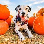 dalmatian my dog 🐕🐕🌍🌎🌏