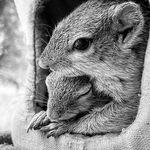 Dingetjie The Squirrel