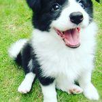 Cutest Dog Photos 🐶😍