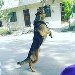 Doggyygram 🐶