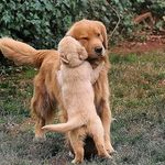 Dogs | Puppies | Pets