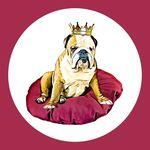 English Bulldog 👑