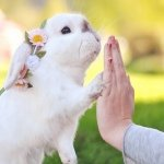 Exempel the bunny