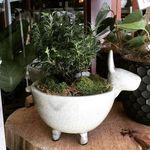 🌿 Fancy Plants 🎍