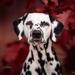 Foscofotografie • dogportraits