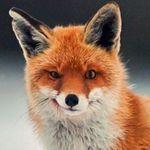 Fox On The Box
