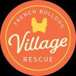 French Bulldog Village Rescue