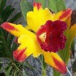 Gardenia Akhyar