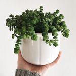 Green plants growing