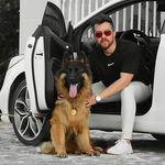 German Shepherd Dogs Puppies