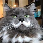 - Hamilton The Hipster Cat -