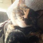Funny & Happy Cats 🐈