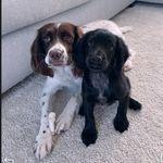 Hazel & Willow 🐾