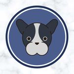 🐶 Bulldog Daily Content 🐶