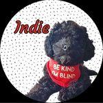 Indie The Blind Poochon