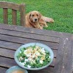 Kale Salad Animals
