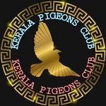 Kerala Pigeons Club (Parava)🕊️