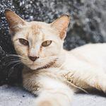 Komunitas Kucing Indonesia 🐈