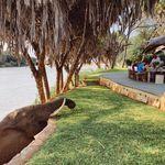 Wildlife & Yoga Retreats | LB