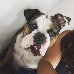 🎀Layla La Gorda Bella🎀