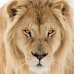 Lion Sanctuary