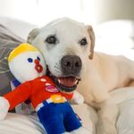 helping dogs Live Like Poh!