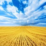 Maksym Yakubchyk