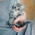 Cats & Kitties