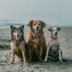 Lizzie, Kylie, Sandman