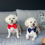 Muffin & Happy: Cute Puppies