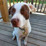 Custom Dog Tag + Pet Collars
