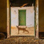 WildlifePhotographerOfTheYear
