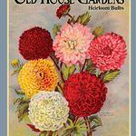 OldHouseGardens-HeirloomBulbs
