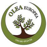 Oleaeuropea