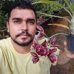 Orquídario Oliveira