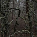 The Pine Barrens - documentary