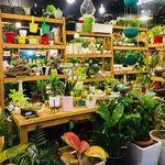 PLANT A HOME