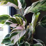 Plants by Tiny
