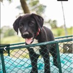 Pointe Coupee Animal Shelter